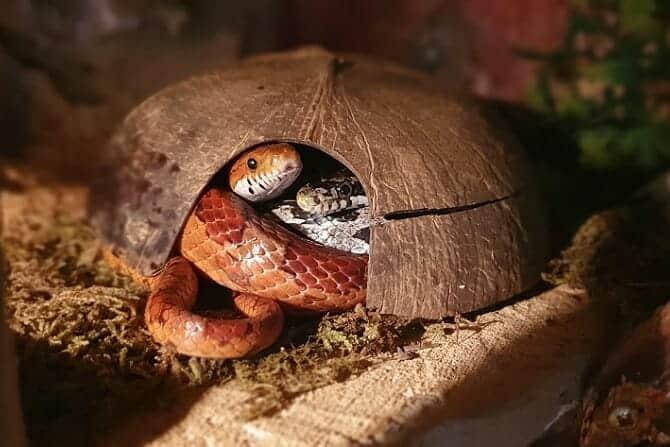 Tiergestützte Arbeit Ausbildung - Schlangen im Haus