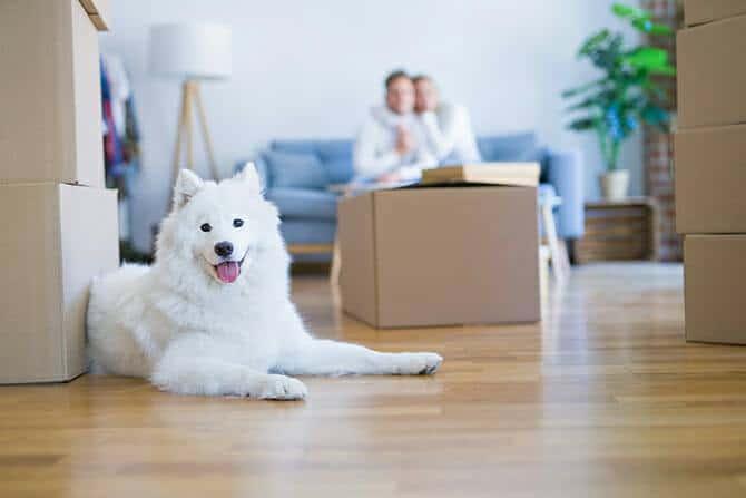 heilpraktiker fuer tiergestuetzte psychotherapie ausbildung paar auf couch mit umzugskisten und weissem hund