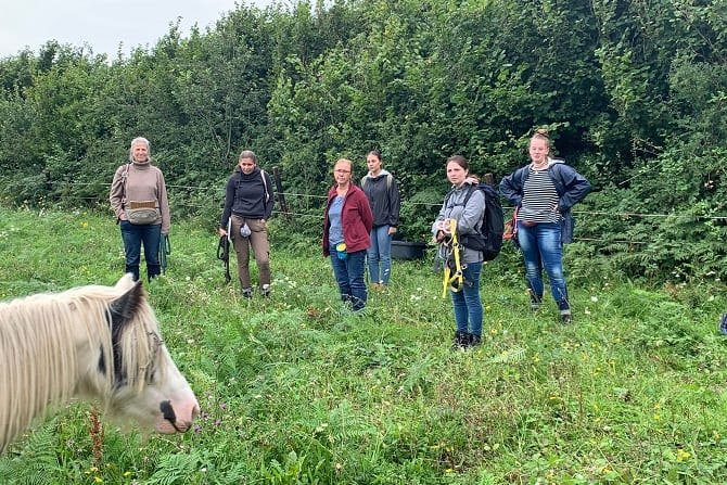 Studienreise Irland ATN - Blickschulung Pferd von einer Schülergruppe