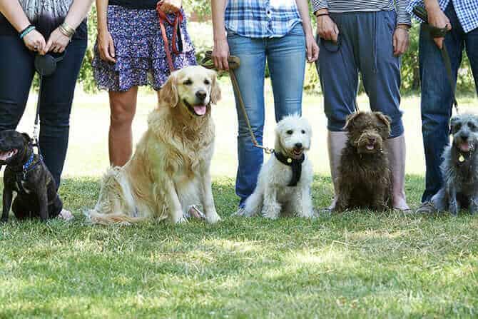 Hundetraqiner Ausbildung - Gruppe verschiedener Hunde beim Hundetraining