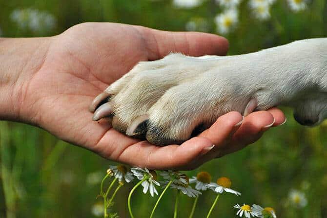 Erlebnispädagogik Ausbildung - Hund legt Pfote in Hand von Menschen