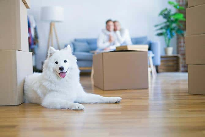 Heilpraktiker für tiergestützte Psychotherapie Ausbildung - Paar auf Couch mit Umzugskisten und weißem Hund