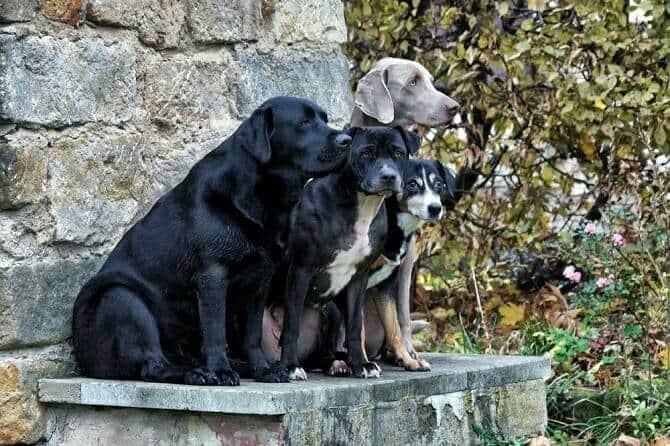 Hundeverhaltensberater Ausbildung - vier Hunde sitzen nebeneinander