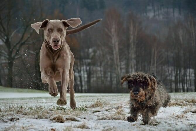 Hundeverhaltensberater Ausbildung -