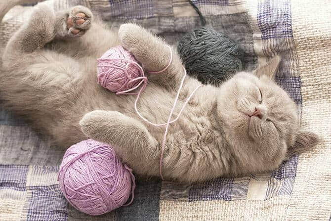 Katzenverhaltensberater Ausbildung - glückliche Katze liegt auf dem Rücken auf Leintüchern und hat Wollknäule um ihre Beine gewickelt