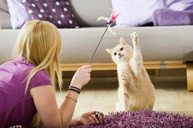 Katzenverhaltensberater Ausbildung - junge blonde Frau spielt mit heller Katze im Wohnzimmer