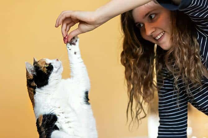 Katzenverhaltensberater Ausbildung - junge Frau bringt Katze Kunststückchen bei