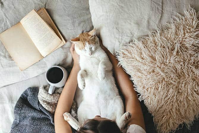 Katzenverhaltensberater Ausbildung - Katze liegt im Bett auf dem Rücken neben einem Buch, einer Tasse Kaffee und einem Menschen