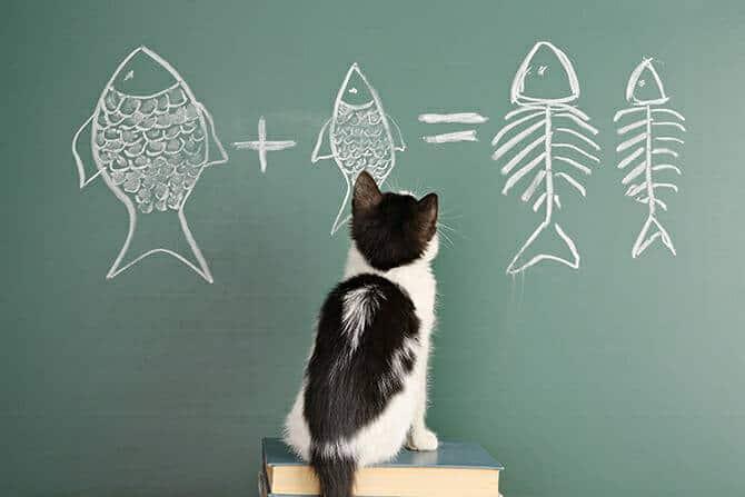 Katzenverhaltensberater Ausbildung - Katze sitzt auf Büchern vor einer grünen Tafel und versucht eine Gleichung zu lösen