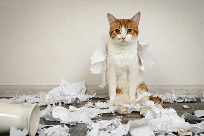 Katzenverhaltensberater Ausbildung - Katze sitzt auf dem Boden im Papierchaos