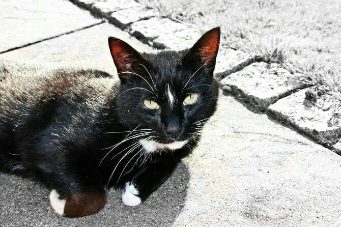 Katzenverhaltensberater Ausbildung - schwarze Katze liegt auf Asphalt neben einer Wiese