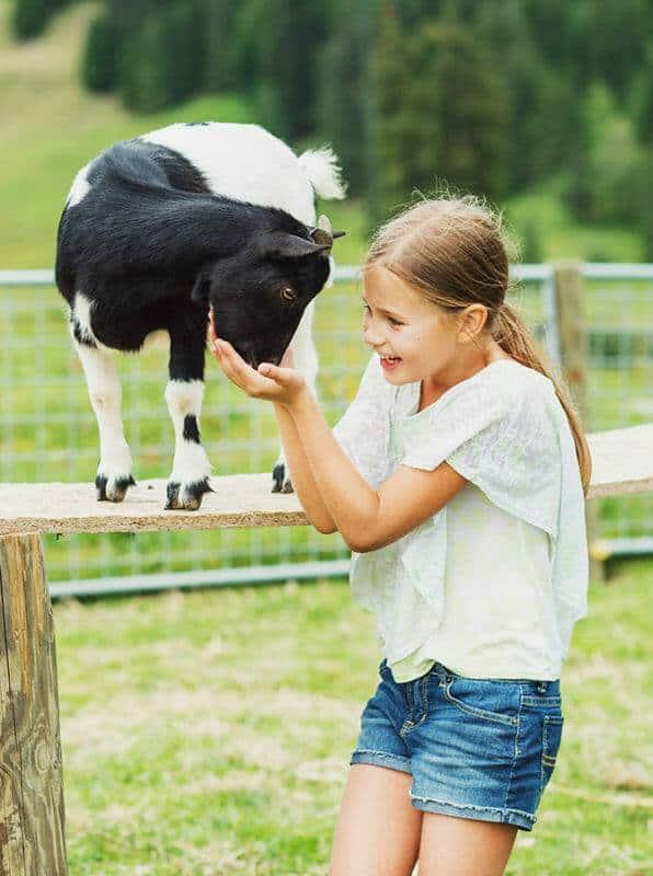 Tiergestützte Arbeit Ausbildung - glückliches junges Mädchen mit Ziege im Sommer auf einer Farm