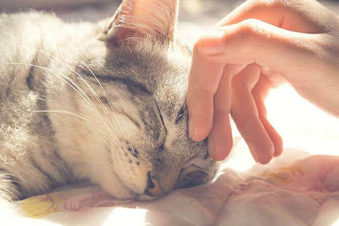 Tiergestützte Arbeit Ausbildung - Katze mit geschlossenen Augen wird im Liegen gestreichelt