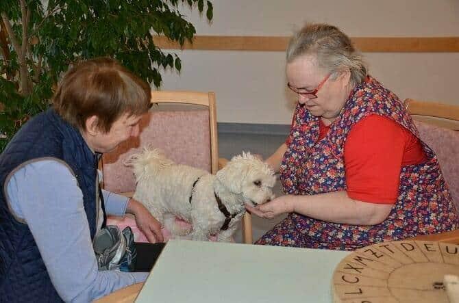 Tiergestützte Arbeit Ausbildung - zwei ältere Frauen streicheln kleinen Hund im Seniorenheim