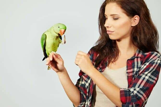 Tiertrainer Ausbildung - Papagei wird von Frau mit braunen Haaren gefüttert