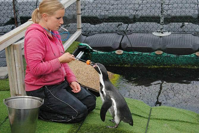 Tiertrainer Ausbildung - Pinguin Target Training