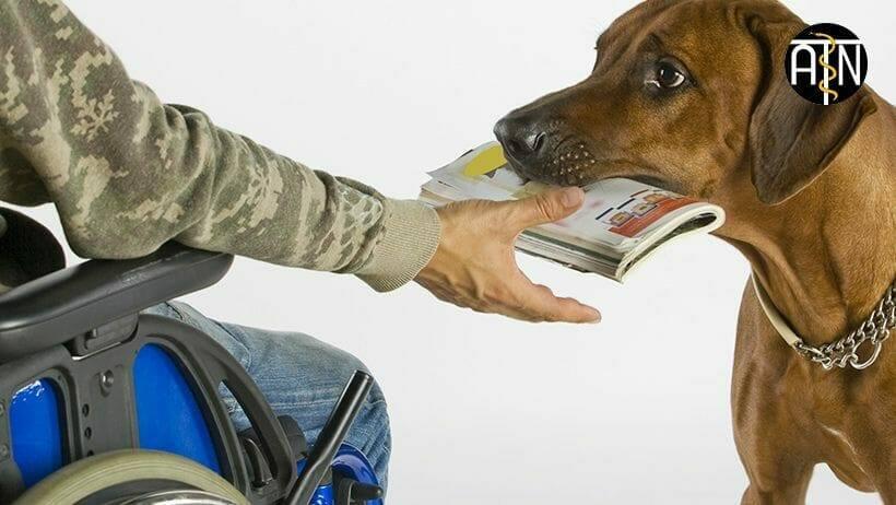 als assistenzhundetrainer hunde fuer menschen mit beeintraechtigungen ausbilden