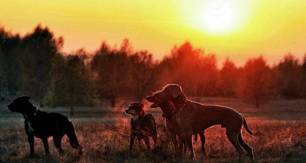 antijagdtraining beim hund anzeigen von wild
