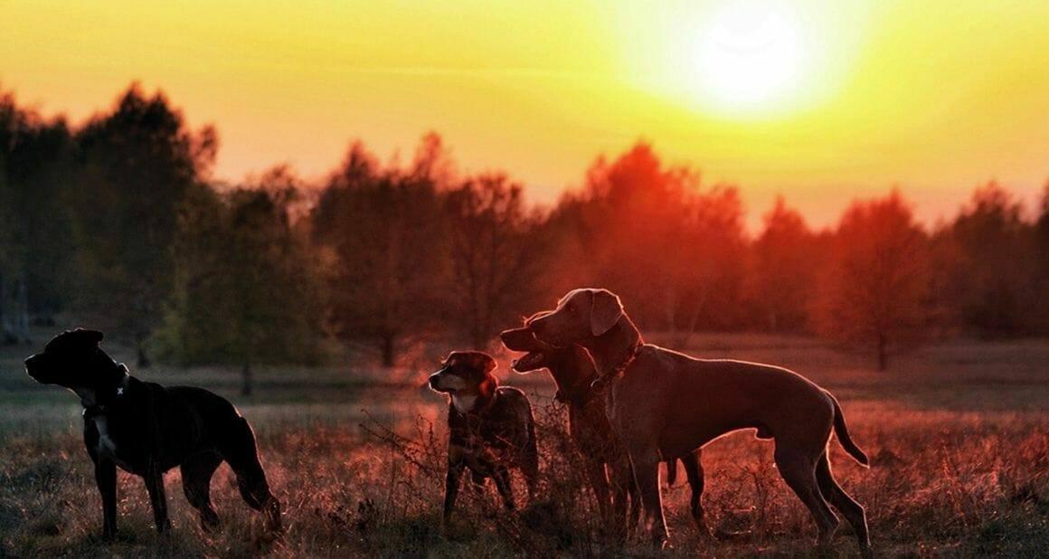 Antijagdtraining beim Hund – Anzeigen von Wild