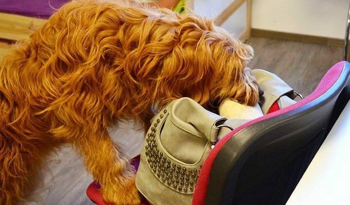 assistenzhund bringt sachen