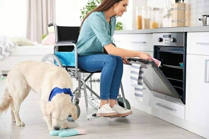 Assistenzhundetrainer Ausbildung - Hund unterstützt junge Frau im Rollstuhl in der Küche