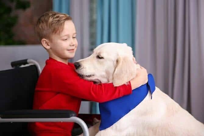 Assistenzhundetrainer Ausbildung - Junge im Rollstuhl umarmt weißen Hund