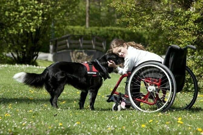 Assistenzhundetrainer Ausbildung - Mädchen im Rollstuhl kuschelt mit Begleithund