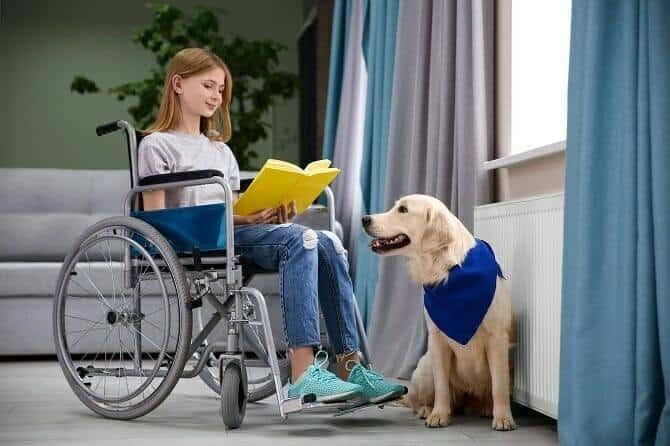 Assistenzhundetrainer Ausbildung - Mädchen im Rollstuhl liest Buch und Assistenzhund schaut zu