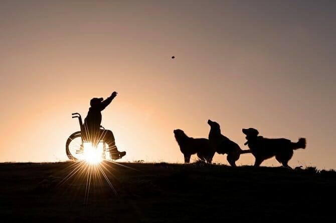 Assistenzhundetrainer Ausbildung - Mann im Rollstuhl spielt Ball mit 3 Hunden im Sonnenuntergang