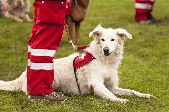 Assistenzhundetrainer Ausbildung - Rettungshund im Einsatz