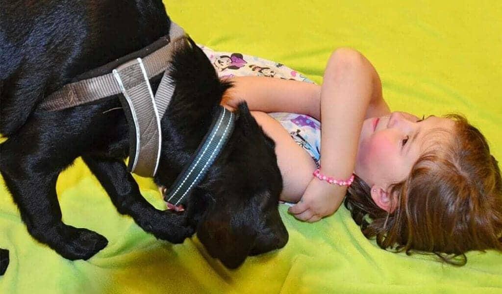 assistenzhundetrainerin carina stanek