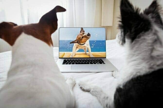 ATN Online Campus - zwei Hunde schauen Online Video über Hunde an - aus der Praxis für die Praxis