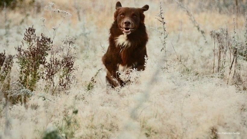 bewegungsfreudige hunde muessen auch im winter viel raus