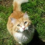 das 10 leckerchen spiel fuer katzen