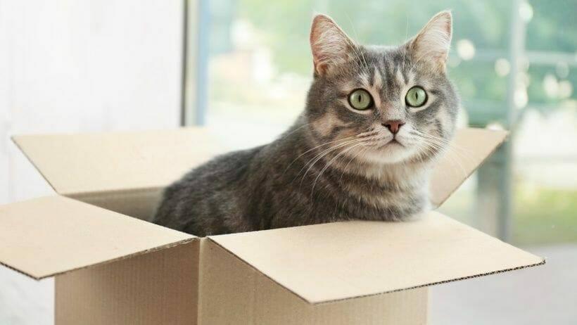 die meisten katzen moegen kartons sehr