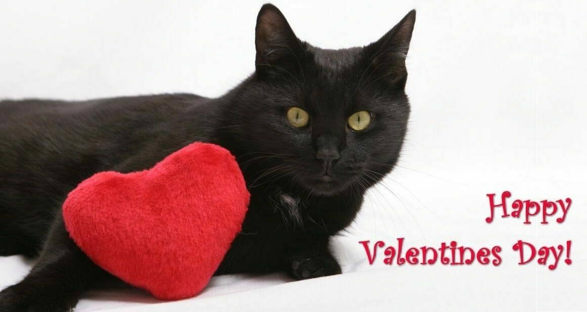 Ein Katzenminze Herz für Mieze