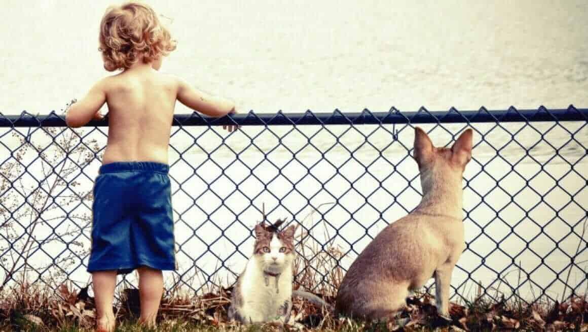 Erziehungsstile in der Mensch Tier Beziehung