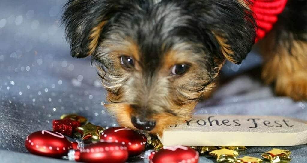 gefahren unterm weihnachtsbaum frohes fest mit hund und co