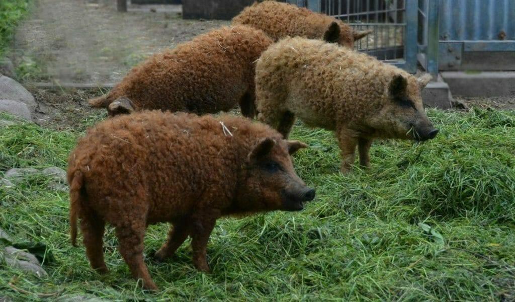 gefuehle bei tieren artgerechte lebensbedingungen statt massentierhaltung sind ein gebot des respekts