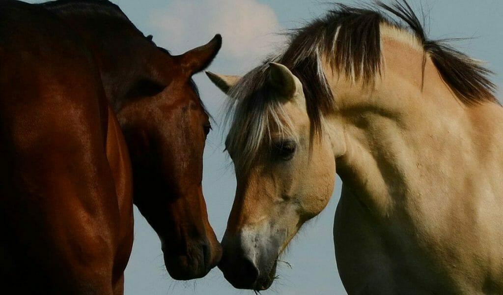 gefuehle bei tieren es gibt sie die neuen ethischen ansaetze fuer den umgang mit mitgeschoepfen
