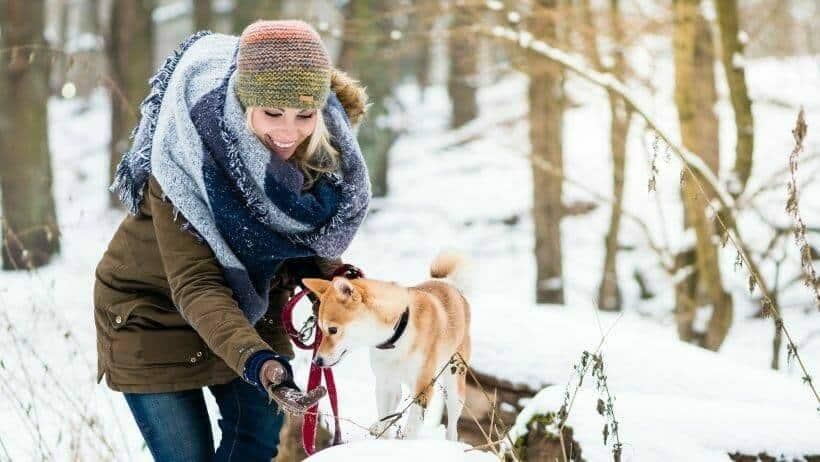 hunde spaziergang an silvester