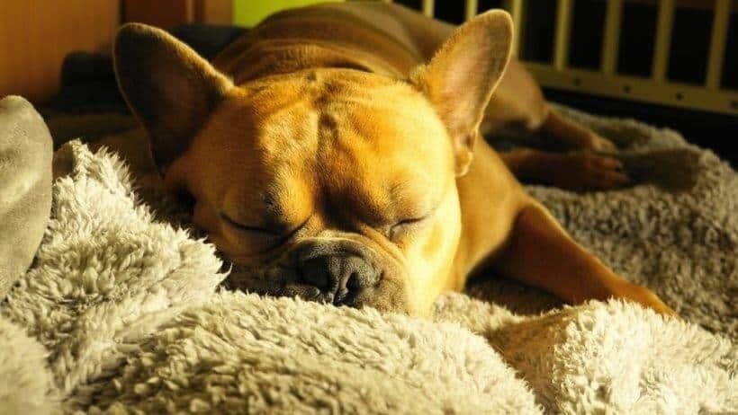 hundedecke und entspannung