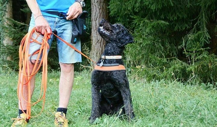 hundetrainer ueber den beruf atn hundetrainer reportage 2