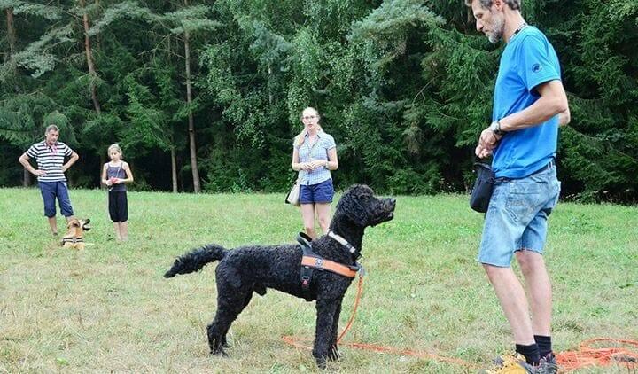 hundetrainer ueber den beruf atn hundetrainer reportage 3