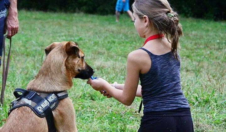 hundetrainer ueber den beruf atn hundetrainer reportage 4
