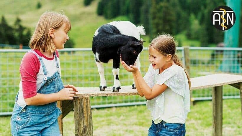 in der tiergestuetzten arbeit werden tiere gezielt im therapeutischen bereich eingesetzt
