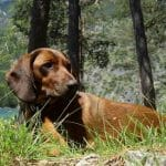 jagdhunde familienhunde oder arbeitstiere