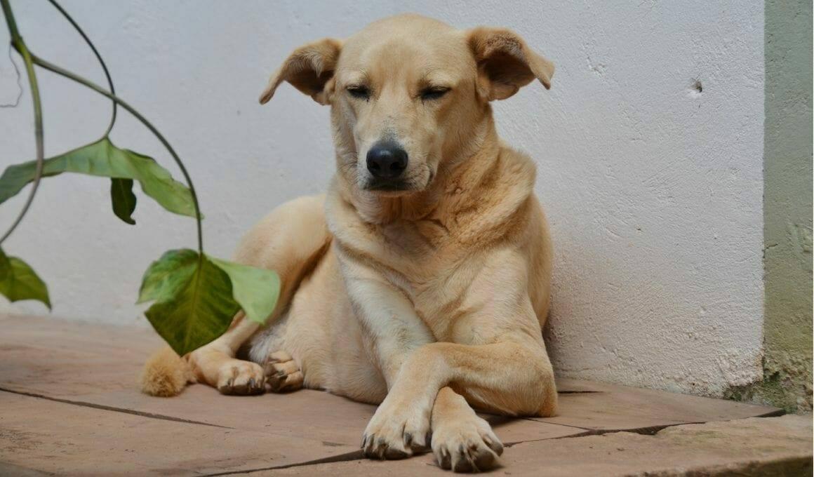 Jeder Hund kann ein Schulhund sein
