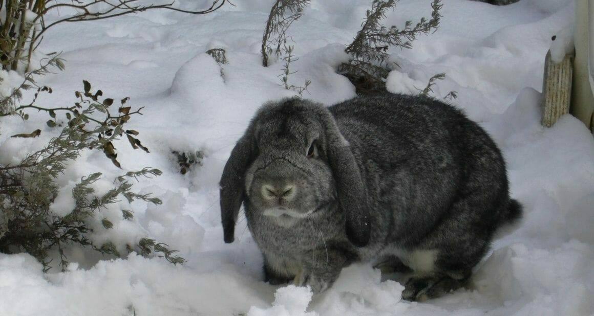 Kaninchenhaltung im Winter