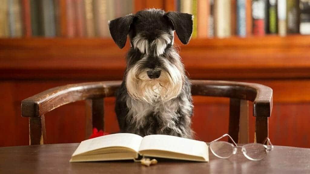kommt die gassipflicht fuer hunde tierschutzhundeverordnung